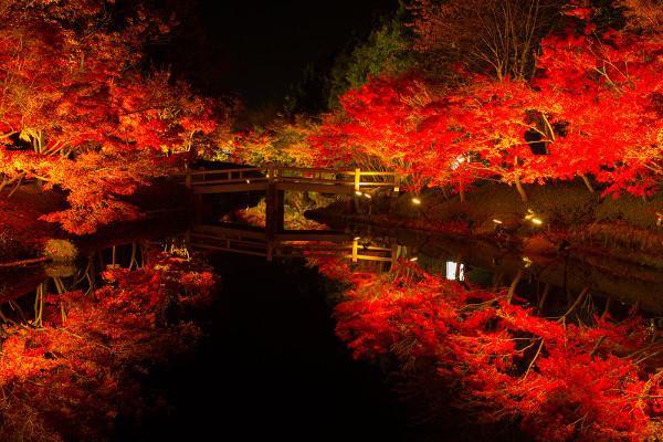 見渡す限り光の絶景!なばなの里イルミネーション - autumn p01