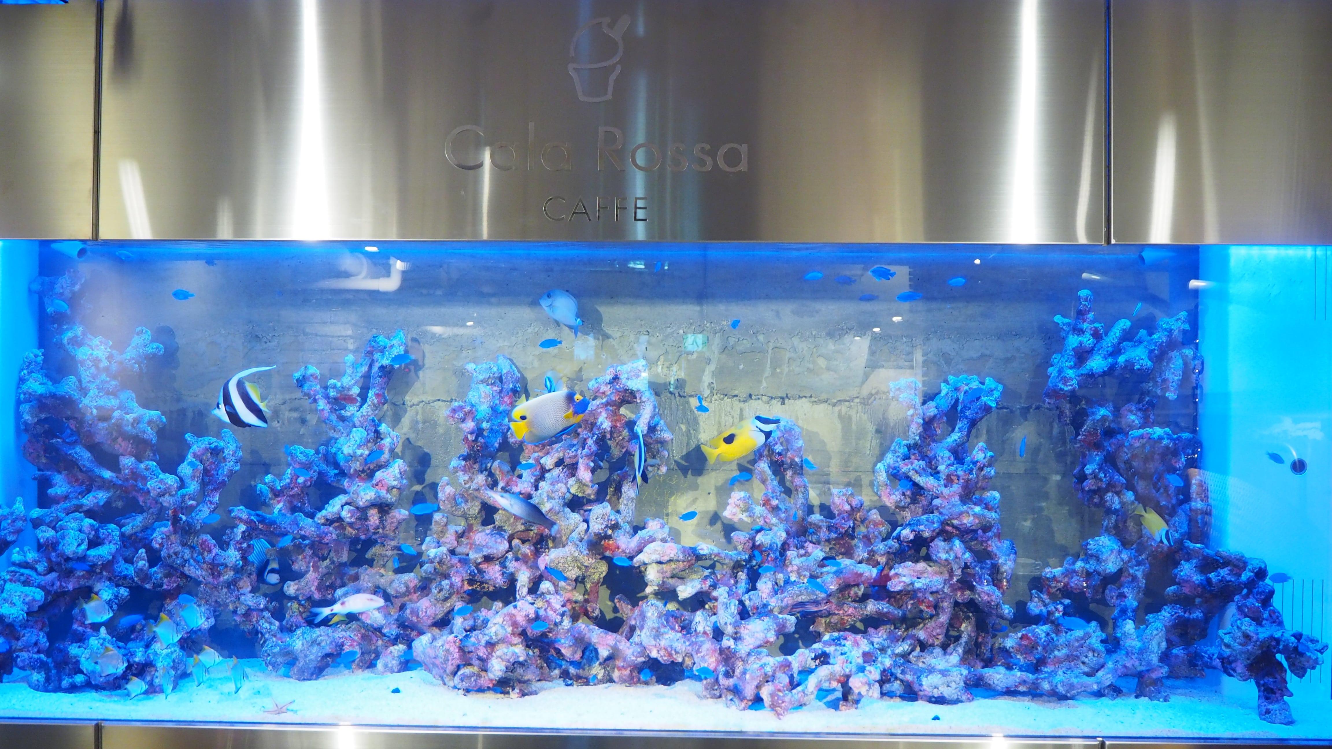 カラフルな熱帯魚があなたをお出迎え! カフェ「Cala Rossa」の贅沢なジェラート - P2100841 min