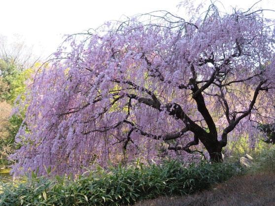 白鳥庭園が「異界庭園」へと変身!アートイベント『ゴエンナーレ』が開催へ - 6636d855a00c8c70145b4d5036978c02