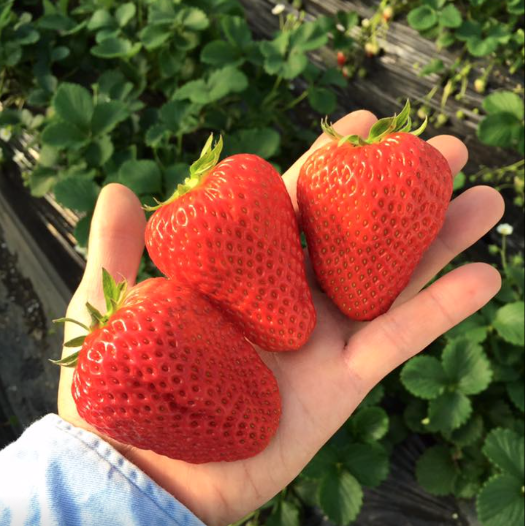 美味しくて可愛い苺スイーツが食べたいなら、岡崎のいちご農家「伊藤園」へ - 7a2bc617df45a9314f9ddbcaf75f1752