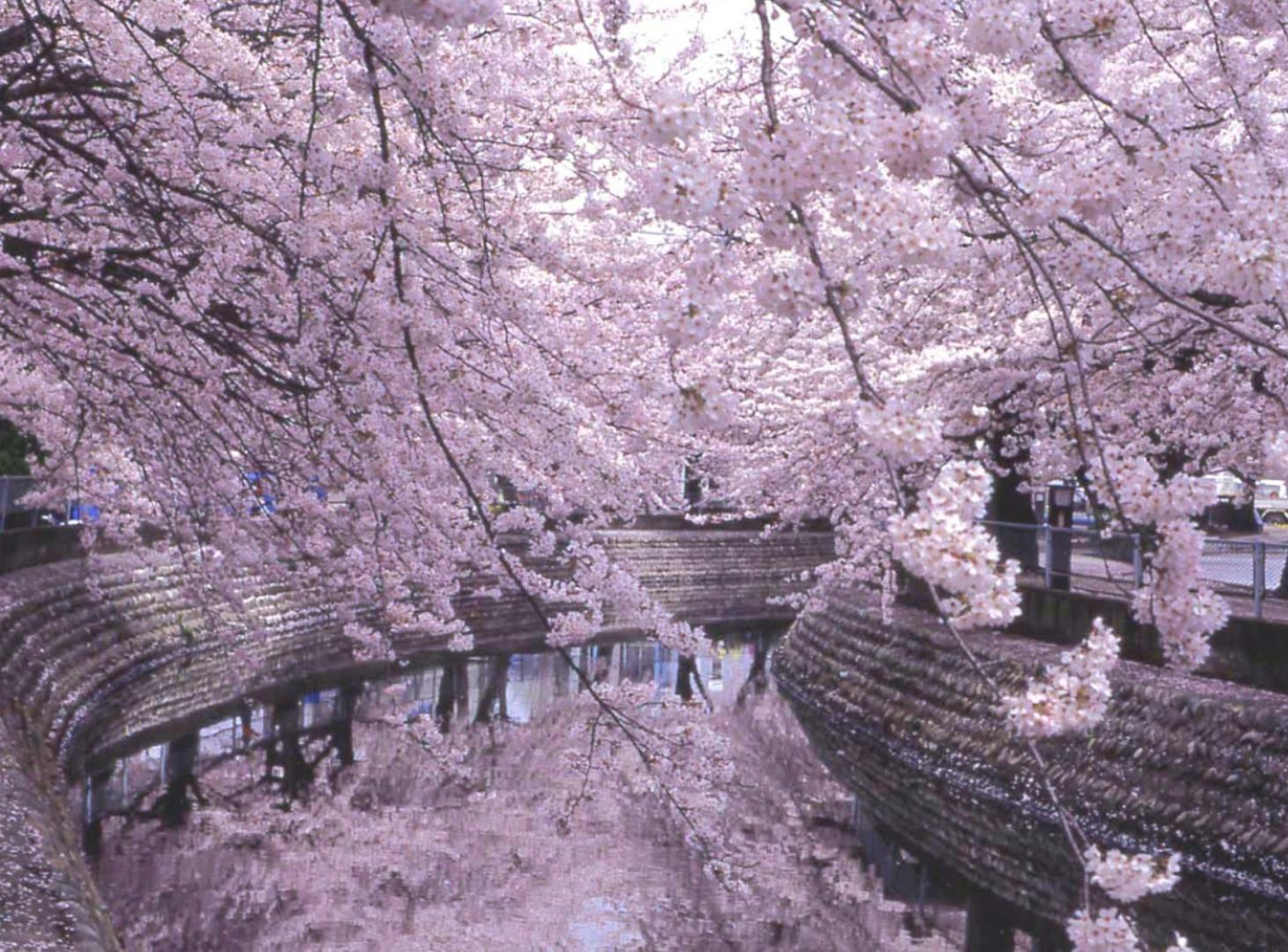 美しい桜で春を満喫。名古屋から行けるお花見スポット6選【2020】 - 851e59812d109ebe24102c2c5be01ecd