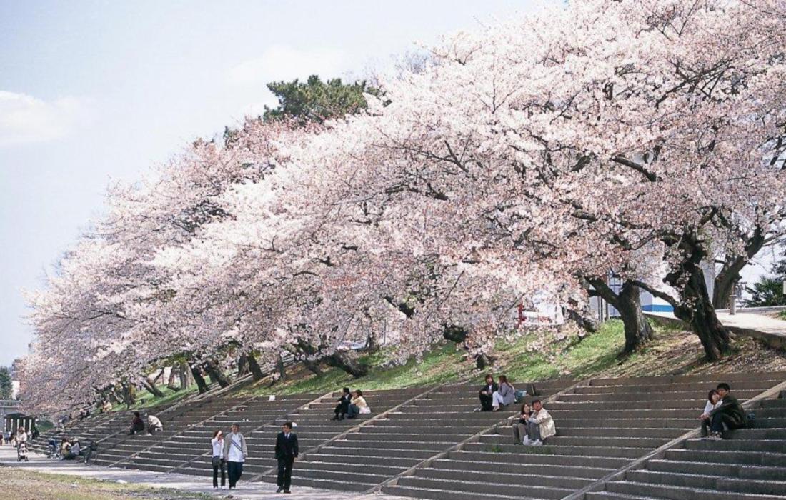 平成最後のお花見に。圧巻の美しさを誇る、愛知・岐阜のお花見スポット8選