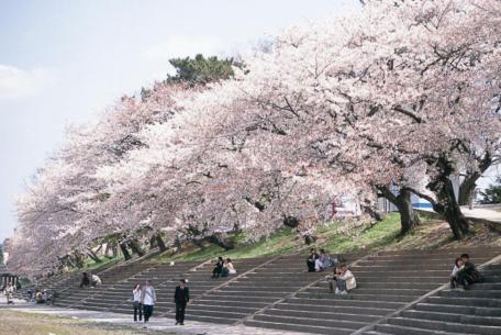 美しい桜で春を満喫。名古屋から行けるお花見スポット6選【2020】