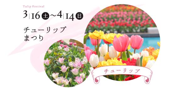 ラグーナテンボスで春を彩る「チューリップまつり」が開催中! - tulip02
