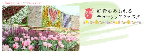 ラグーナテンボスで春を彩る「チューリップまつり」が開催中! - tulip03