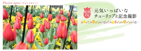 ラグーナテンボスで春を彩る「チューリップまつり」が開催中! - tulip07