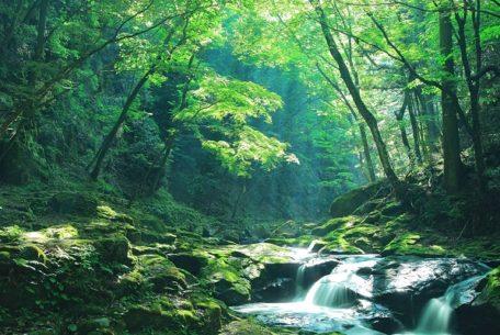 マイナスイオンたっぷりの渓谷で過ごす夏。三重「赤目四十八滝」で忍者修行と滝行!