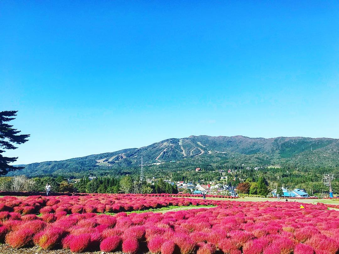 秋晴れの休日は高原で景色と運動を楽しもう!郡上「ひるがのピクニックガーデン」 - 7feeafef1e74204418114f3abb2b1754