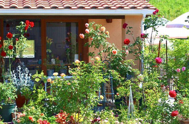 お花をかたどったキュートな断面のフルーツサンド「fruitful(フルーツフル)」 - slider5