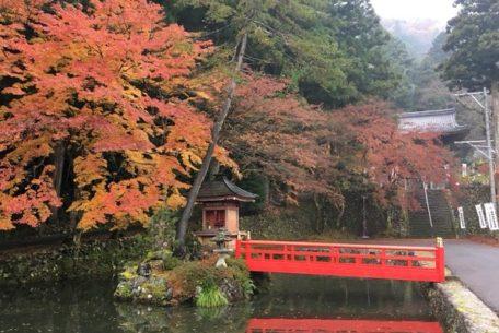 お寺の紅葉とピンクカレーを満喫!秋の「伊自良湖」はデートにもおすすめ