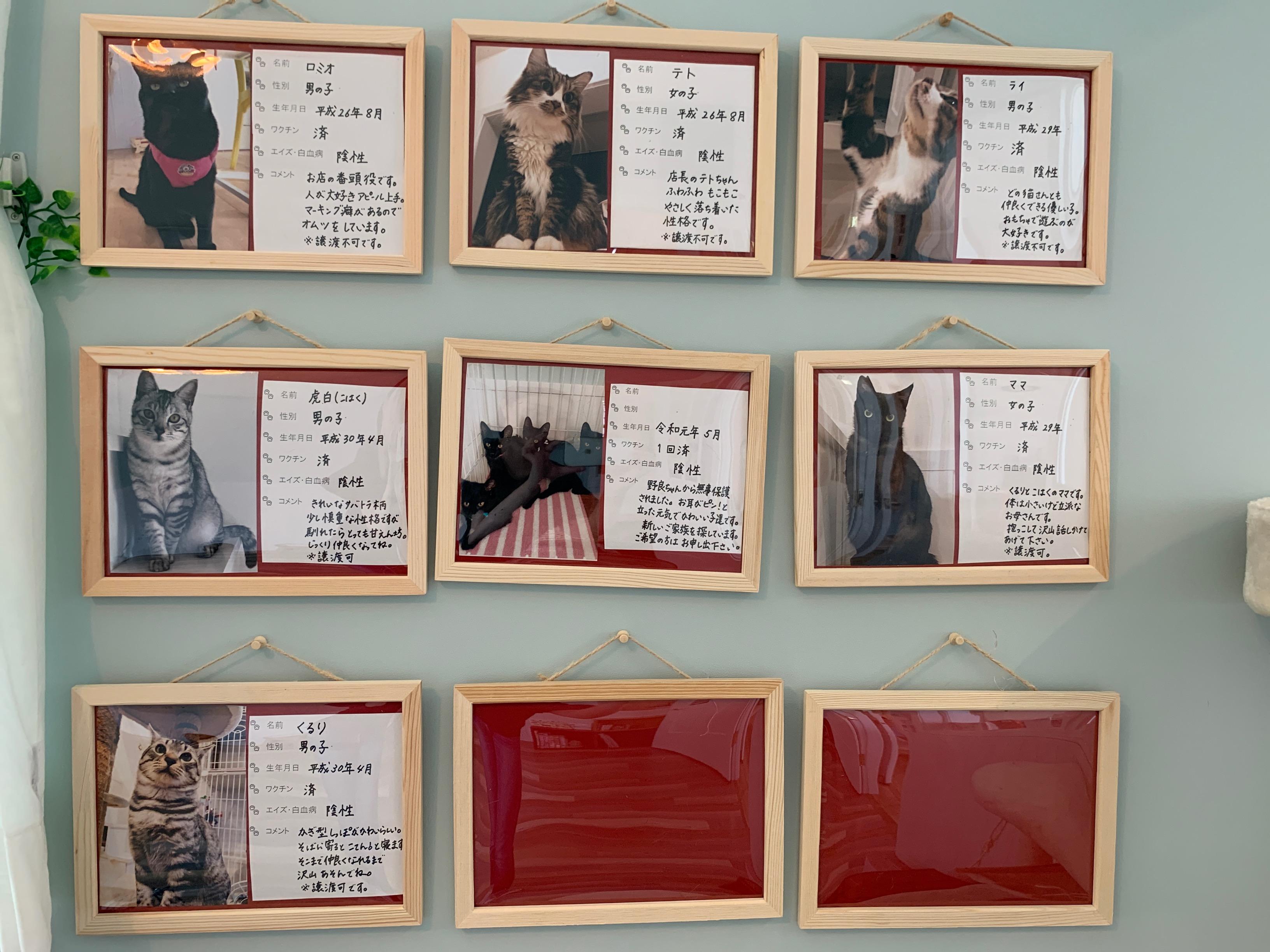かわいい猫に癒されながら社会貢献できるカフェ「保護猫カフェAelu」 - IMG 2762