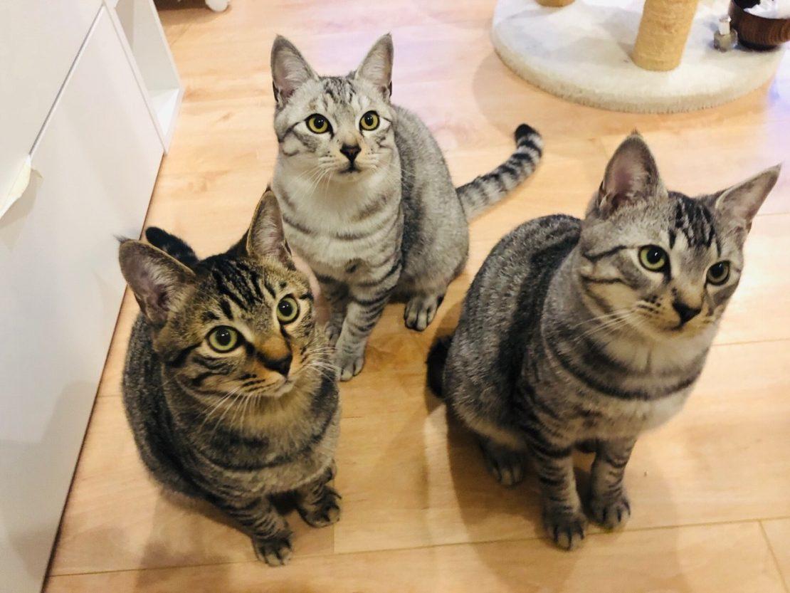 かわいい猫に癒されながら社会貢献できるカフェ「保護猫カフェAelu」