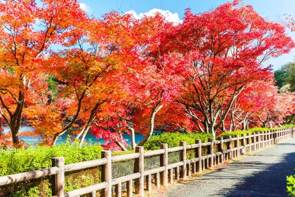 秋限定!岡崎市東公園の紅葉まつりに、あざれあ特製「あにまる御膳」を持って遊びに行こう - 2