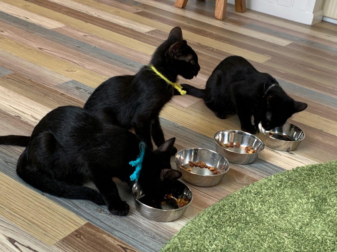 かわいい猫に癒されながら社会貢献できるカフェ「保護猫カフェAelu」 - IMG 2811 1110x833