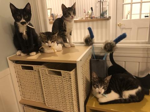 かわいい猫に癒されながら社会貢献できるカフェ「保護猫カフェAelu」 - sp 090778700s1565530119