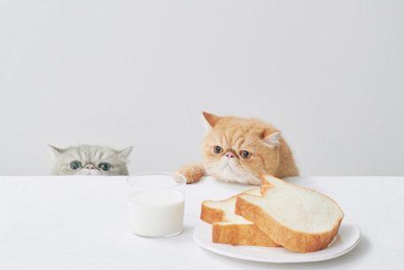 かわいくて本格派!ねこ形の生食パン「ねこねこ食パン」、栄にオープン