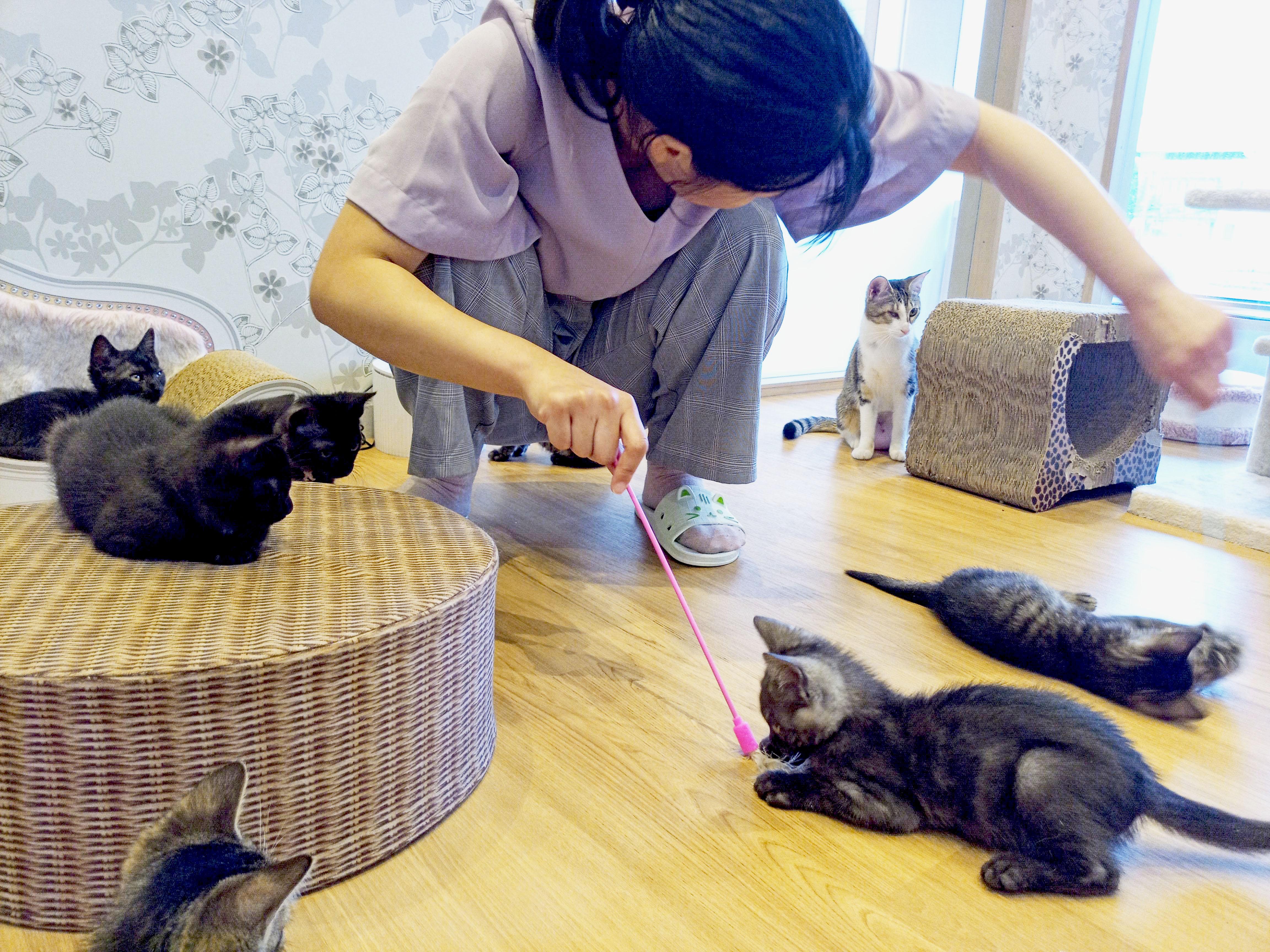 """かわいい""""子猫の幼稚園""""!岡崎に保護猫カフェ「Chaton」がオープン、猫好きライターが実際に行ってきました! - 19E8D962 C687 4455 8ED6 667D430B7E28 1"""