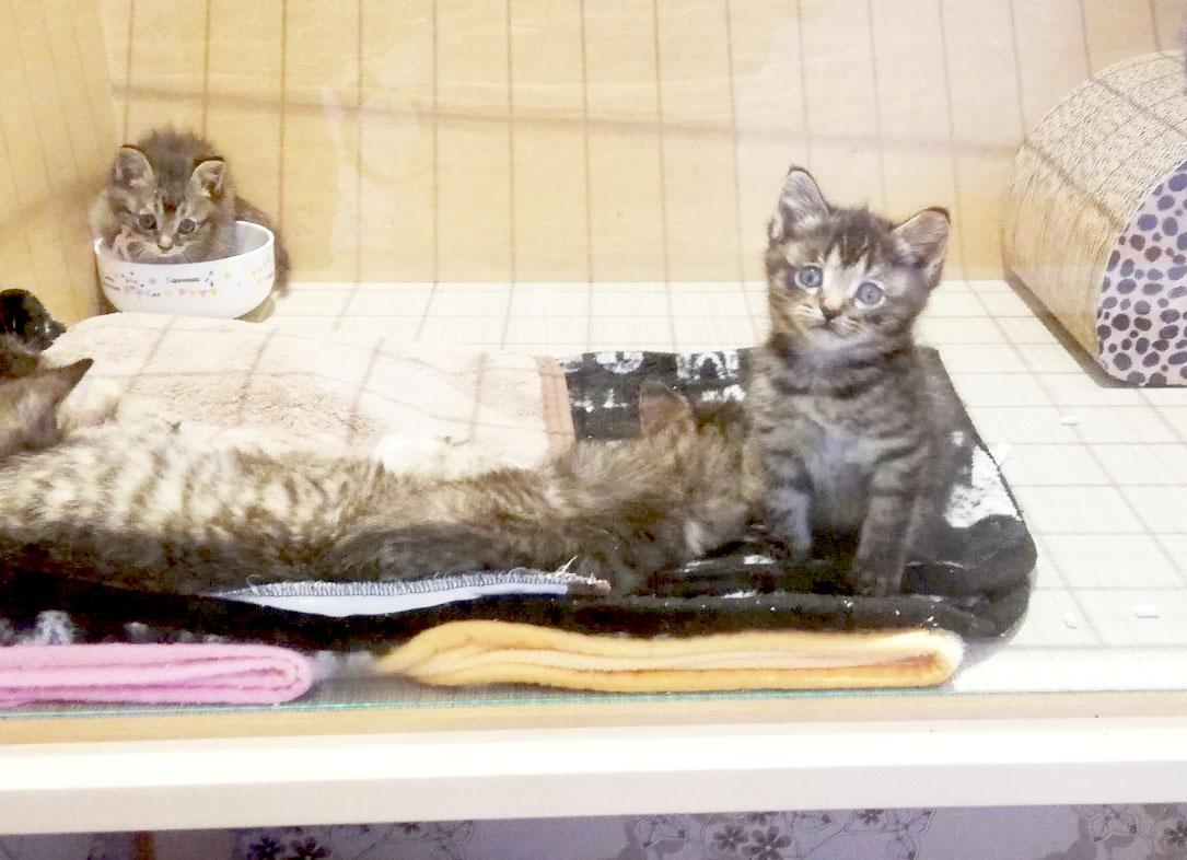 """かわいい""""子猫の幼稚園""""!岡崎に保護猫カフェ「Chaton」がオープン、猫好きライターが実際に行ってきました! - 1BEADC6A 3E1B 418D 96E9 35F49214B76A 1"""