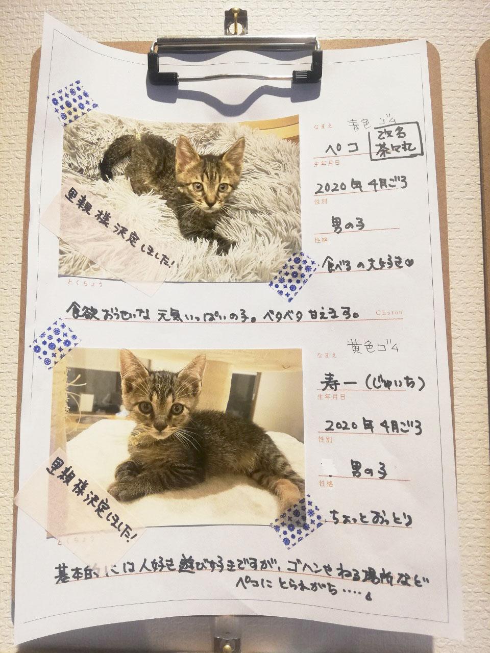 """かわいい""""子猫の幼稚園""""!岡崎に保護猫カフェ「Chaton」がオープン、猫好きライターが実際に行ってきました! - 2020611 200618 0065"""