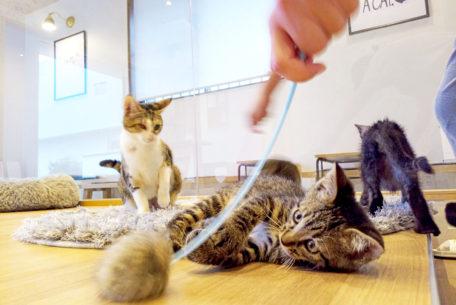 """かわいい""""子猫の幼稚園""""!岡崎に保護猫カフェ「Chaton」がオープン、猫好きライターが実際に行ってきました!"""