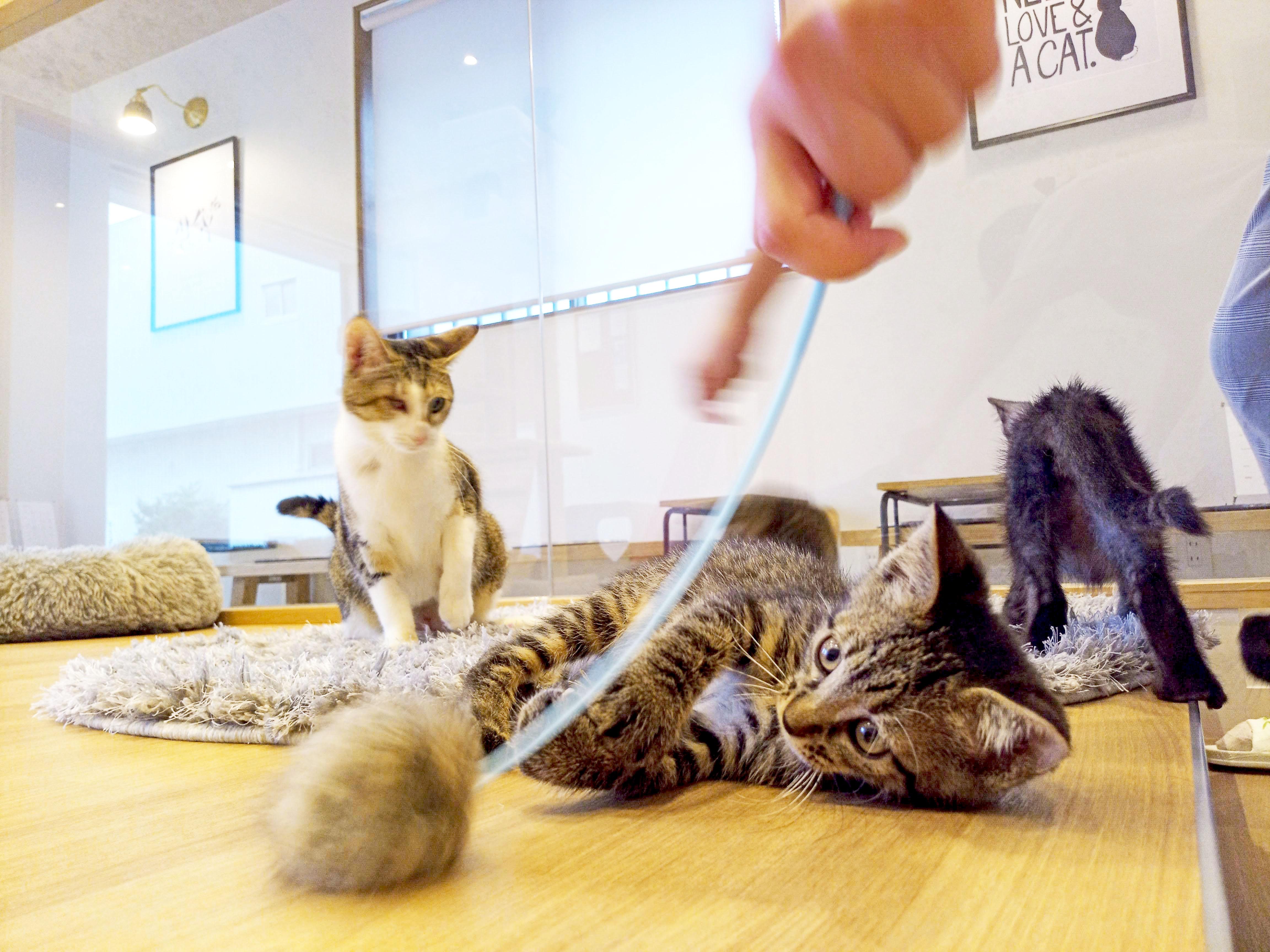 """かわいい""""子猫の幼稚園""""!岡崎に保護猫カフェ「Chaton」がオープン、猫好きライターが実際に行ってきました! - F88D3826 6930 466A 84E1 F3DC6602C976 1"""