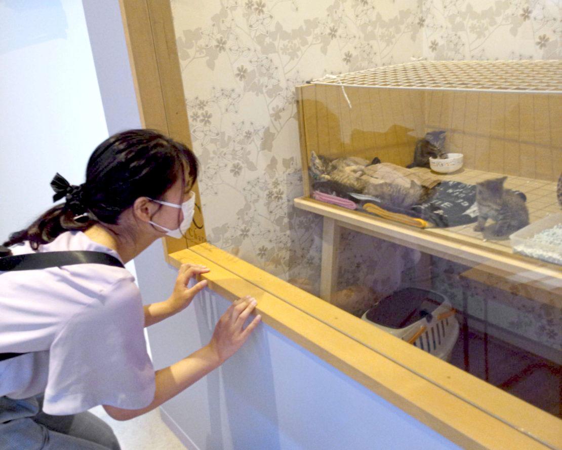 """かわいい""""子猫の幼稚園""""!岡崎に保護猫カフェ「Chaton」がオープン、猫好きライターが実際に行ってきました! - IMG 20200611 135535 8 e1592115600967 1110x888 1"""