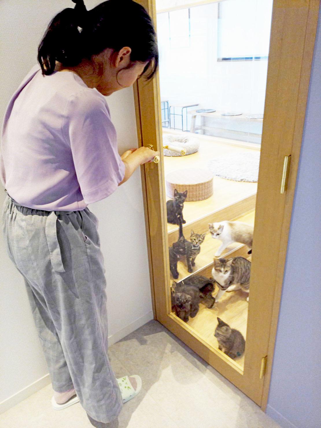 """かわいい""""子猫の幼稚園""""!岡崎に保護猫カフェ「Chaton」がオープン、猫好きライターが実際に行ってきました! - IMG 20200611 141206 6 1110x1480 1"""