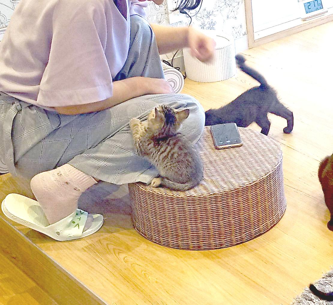 """かわいい""""子猫の幼稚園""""!岡崎に保護猫カフェ「Chaton」がオープン、猫好きライターが実際に行ってきました! - IMG 20200611 141726 5 e1592115689409 1110x1016 1"""