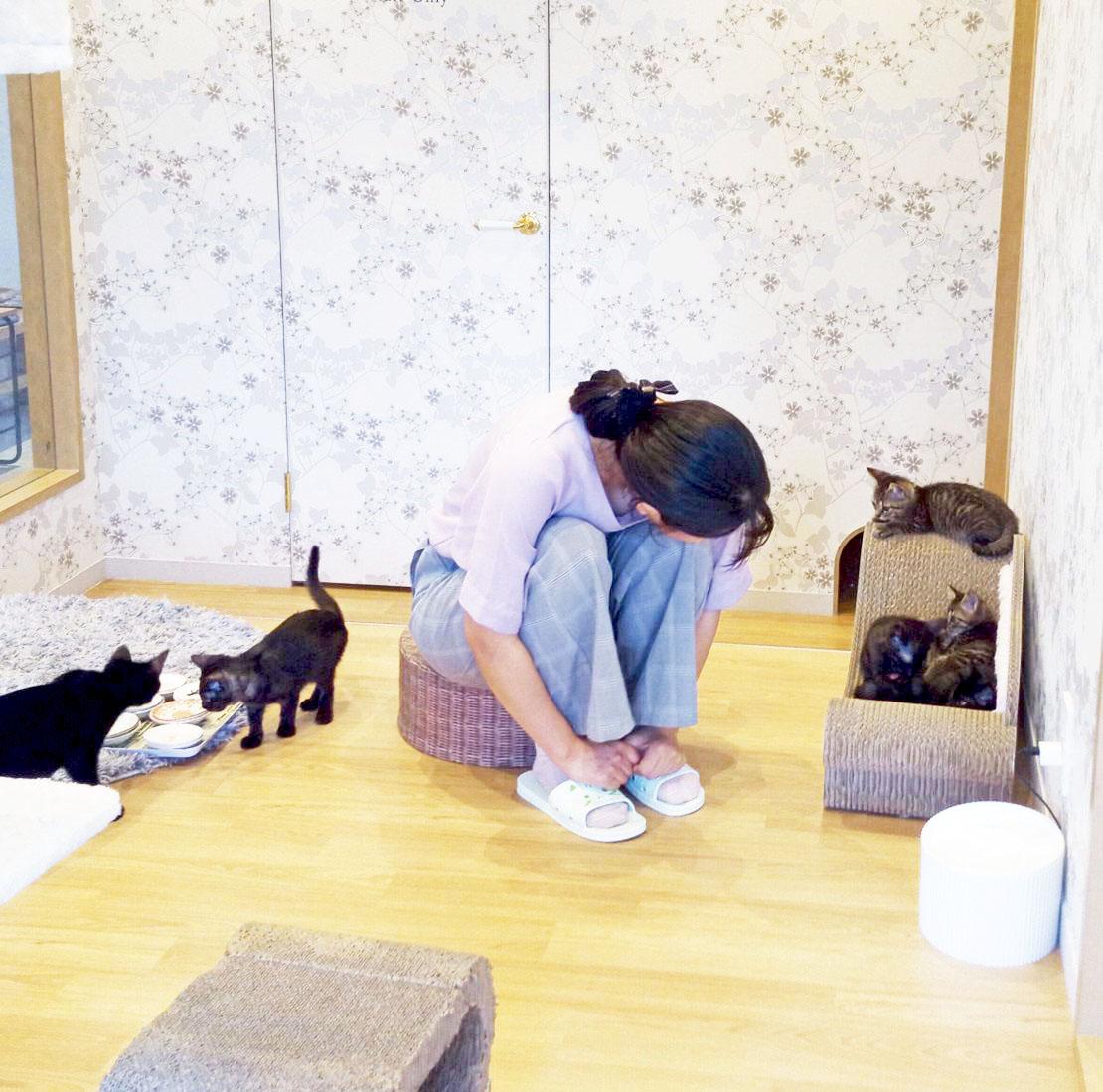 """かわいい""""子猫の幼稚園""""!岡崎に保護猫カフェ「Chaton」がオープン、猫好きライターが実際に行ってきました! - IMG 20200611 142319 6 e1592115737827 1110x1099 1"""