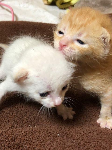 """かわいい""""子猫の幼稚園""""!岡崎に保護猫カフェ「Chaton」がオープン、猫好きライターが実際に行ってきました! - neko"""