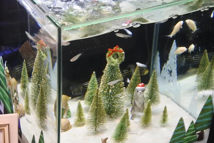長良川と世界の淡水魚のヒミツを探ろう!「世界淡水魚園水族館 アクア・トト ぎふ」 - bb1f32772cb07cb8f99537ead9e68ad0